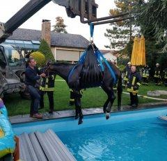 Pferd aus Swimmingpool gerettet (01.09.18)